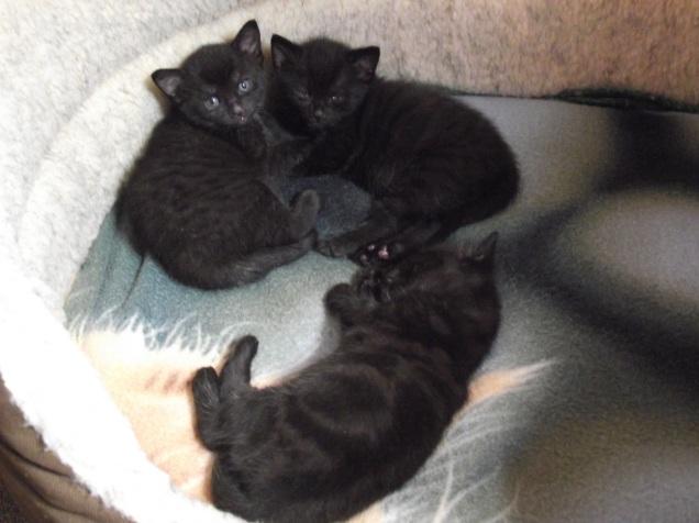 3 week kittens 023