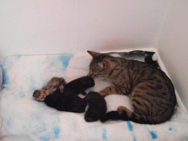 kittens 098