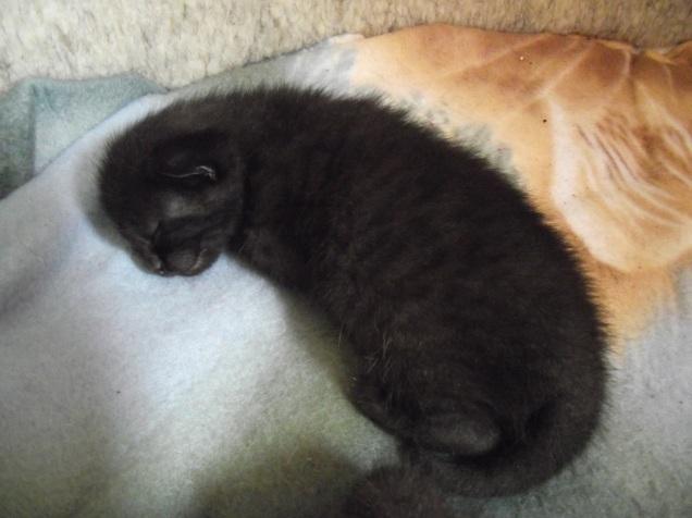 kittens 2 021