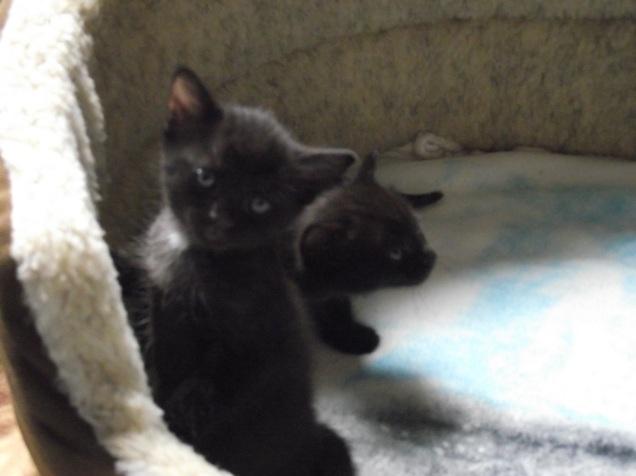 more kittens 007