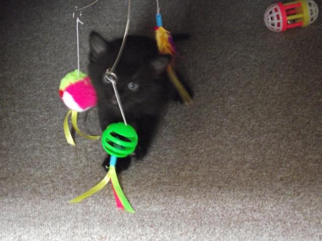 more kittens 020
