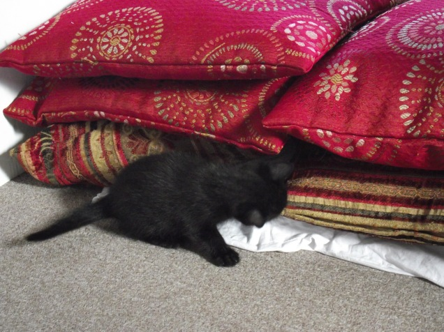 more kittens 035